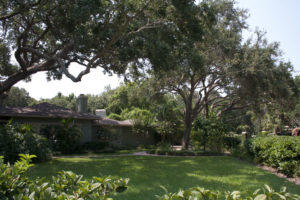austin tree services